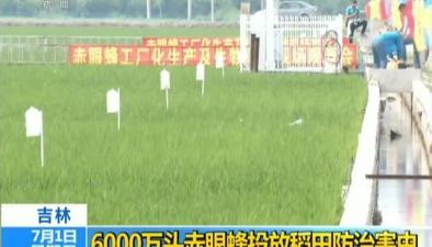 吉林:6000萬頭赤眼蜂投放稻田防治害蟲