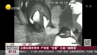 """""""Q版""""球員:企鵝也踢世界杯 産房裏""""搶蛋""""大戰一觸即發"""