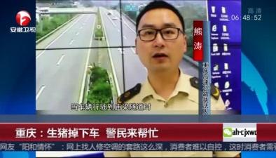 重慶:生豬掉下車 警民來幫忙