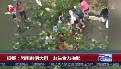 成都:風雨刮倒大樹 女生合力抬起