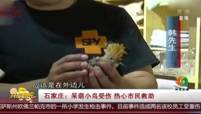石家莊:呆萌小鳥受傷 熱心市民救助