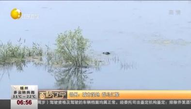 錦州:城市濕地 群鳥匯聚