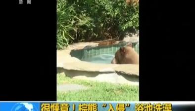 """很愜意!棕熊""""入侵""""浴池洗澡"""