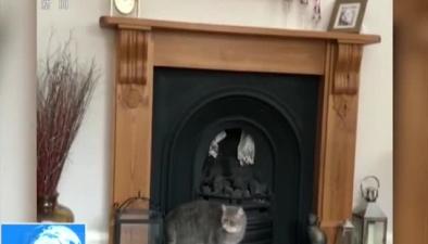 太胖了?小貓爬壁爐臺 失敗告終