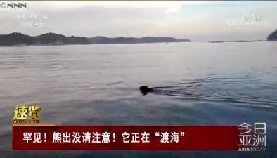 """罕見!熊出沒請注意!它正在""""渡海"""""""