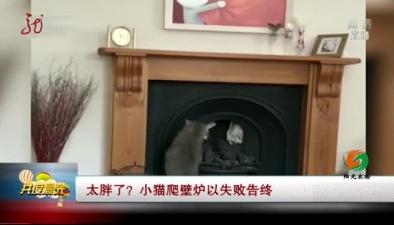 太胖了?小貓爬壁爐以失敗告終