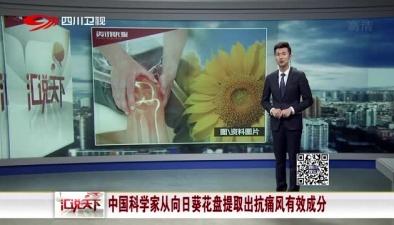 中國科學家從向日葵花盤提取出抗痛風有效成分