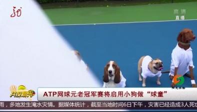 "ATP網球元老冠軍賽將啟用小狗做""球童"""