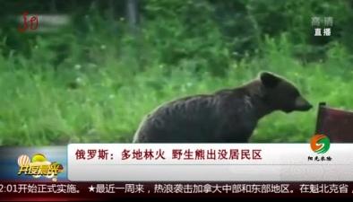 俄羅斯:多地林火 野生熊出沒居民區
