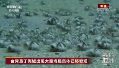 臺灣墾丁海域出現大量海膽集體遷移奇觀