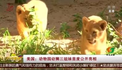 美國:動物園幼獅三姐妹首度公開亮相