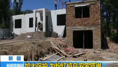 新疆:加大保護 為粉紅椋鳥安家築巢