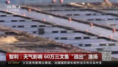 """智利:天氣影響 60萬三文魚""""逃出""""漁場"""