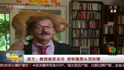 波蘭:教授接受採訪 寵物貓爬頭頂搶鏡