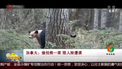 加拿大:偷拍熊一家 獵人險遭襲