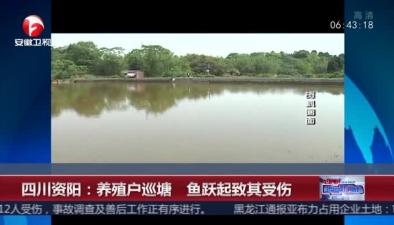 四川資陽:養殖戶巡塘 魚躍起致其受傷