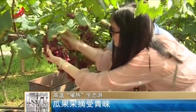 """高溫""""催熱""""生態遊 瓜果採摘受青睞"""