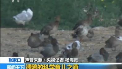 張家口:康巴諾爾湖全球主要遺鷗繁殖地