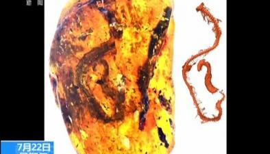 上海:一億年前蛇類琥珀首次被發現