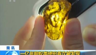 一億年前蛇類琥珀首次被發現