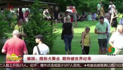 德國:臘腸犬聚會 期待破世界紀錄