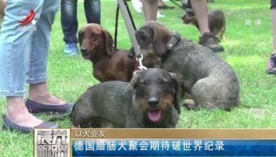 以犬會友:德國臘腸犬聚會期待破世界紀錄