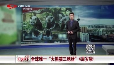 """全球唯一""""大熊貓三胞胎""""4周歲啦!"""