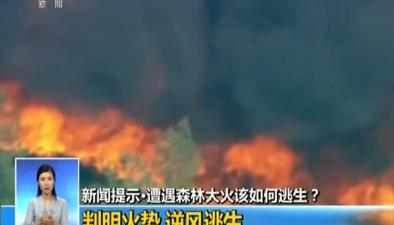 新聞提示:遭遇森林大火該如何逃生?