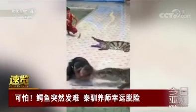 可怕!鱷魚突然發難 泰馴養師幸運脫險
