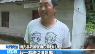 陜西商洛:受傷小黑熊誤闖村民家