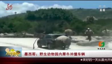 墨西哥:野生動物園內犀牛衝撞車輛