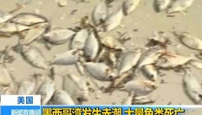 美國:墨西哥灣發生赤潮 大量魚類死亡