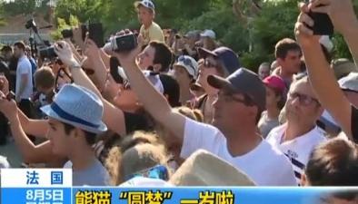 """法國:熊貓""""圓夢""""一歲啦"""