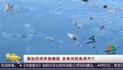 高溫熱浪席卷德國 多條河段魚類死亡