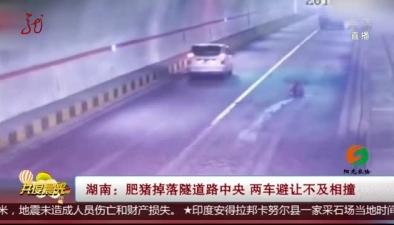 湖南:肥豬掉落隧道路中央 兩車避讓不及相撞