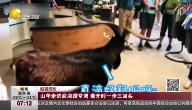 酷暑難耐:山羊走進商店蹭空調 離開時一步三回頭