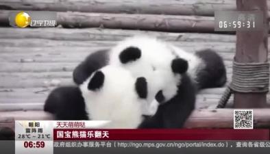 天天萌萌噠:國寶熊貓樂翻天