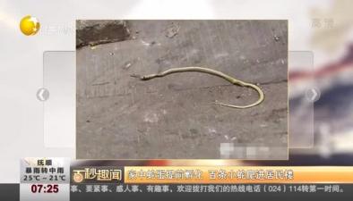 家中蛇蛋提前孵化 百條小蛇爬進居民樓
