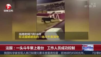 法國:一頭鬥牛竄上看臺 工作人員成功控制