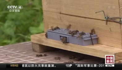 """重慶城口上演現實版""""熊出沒"""""""