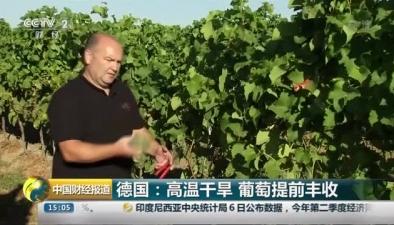 德國:高溫幹旱 葡萄提前豐收