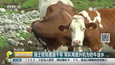 瑞士牧場遭遇幹旱 軍隊用直升機為奶牛送水