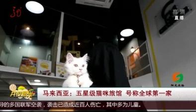 馬來西亞:五星級貓咪旅館 號稱全球第一家