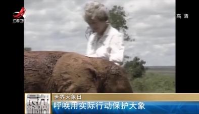 世界大象日:呼喚用實際行動保護大象