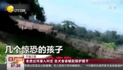不速之客:老虎過河潛入村莊 忠犬舍命驅趕保護孩子