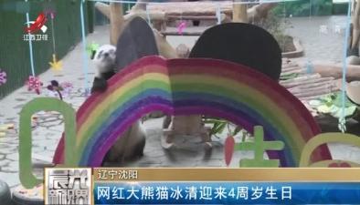 遼寧沈陽:網紅大熊貓冰清迎來4周歲生日
