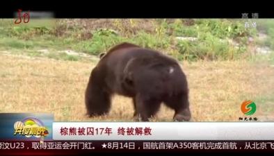 棕熊被囚17年 終被解救