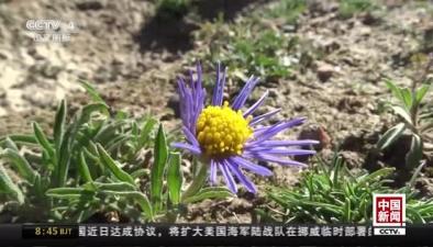 甘肅酒泉:國家一級保護動物藏野驢再現