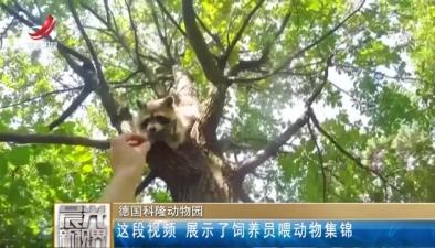 德國科隆動物園:這段視頻 展示了飼養員喂動物集錦