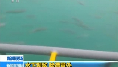 水下觀鯊 險遭意外